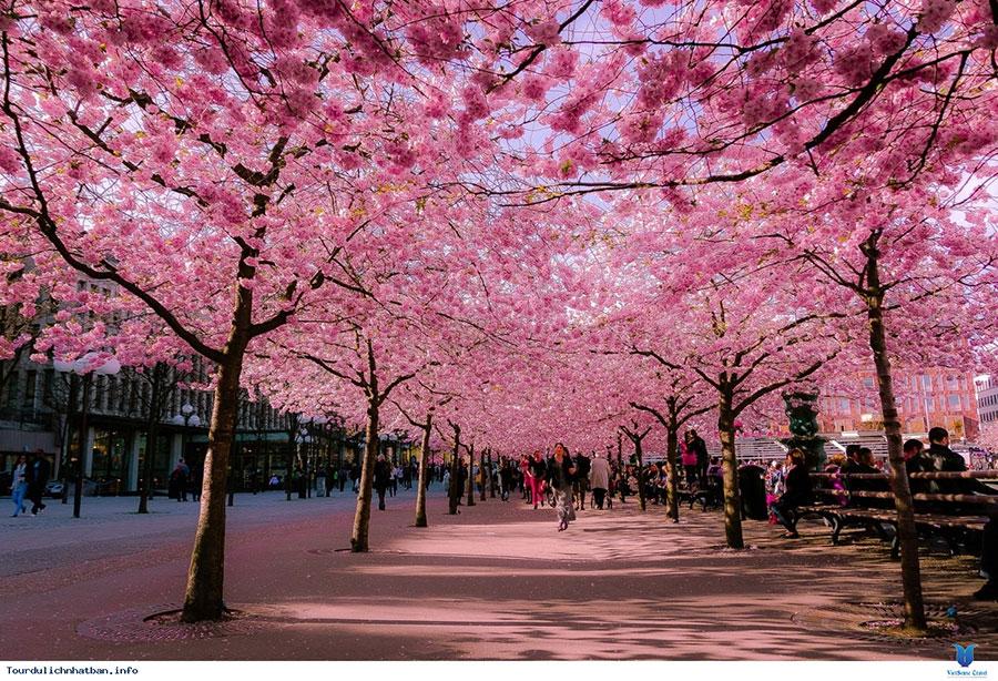 Xin Visa Đi Nhật Mất Bao Lâu