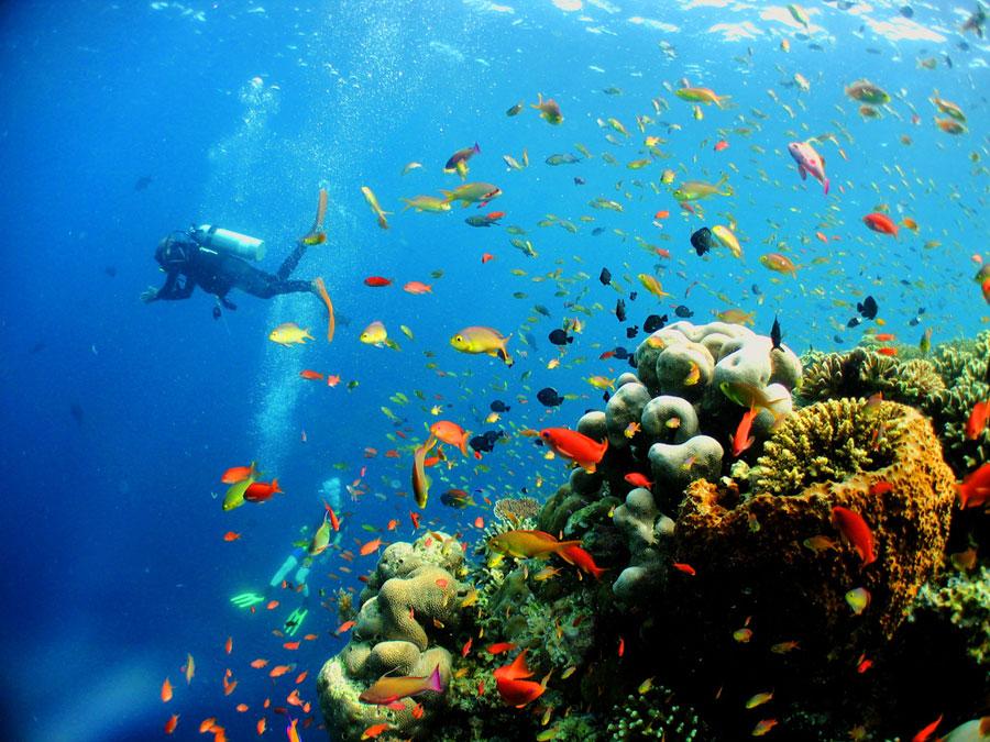 Lặn Ngắm San Hô Ở Langkawi