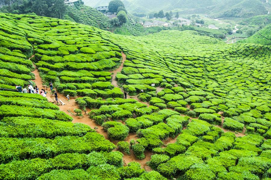 Nếu bạn yêu thiên nhiên đừng bỏ qua Tour Du Lich Malaysia 6 Ngày