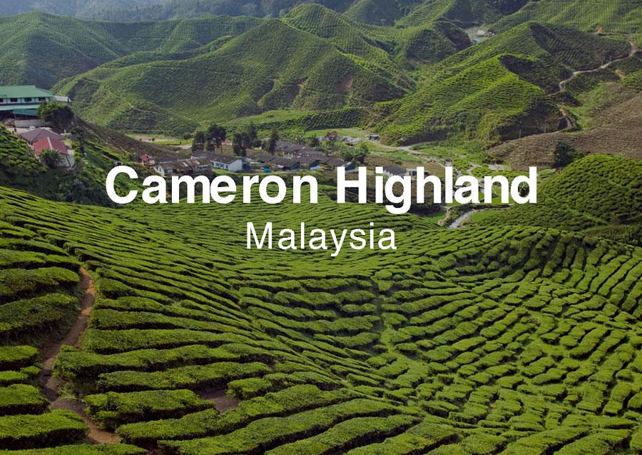 Thiên Đường Xanh Cao Nguyên Camaron Malaysia