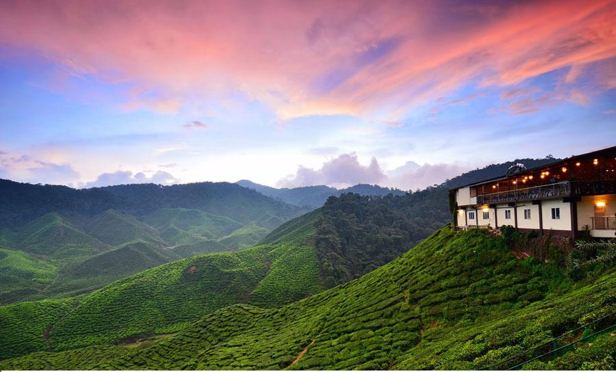 Hé Lộ Thiên Đường Xanh Cameron Highlands Malaysia