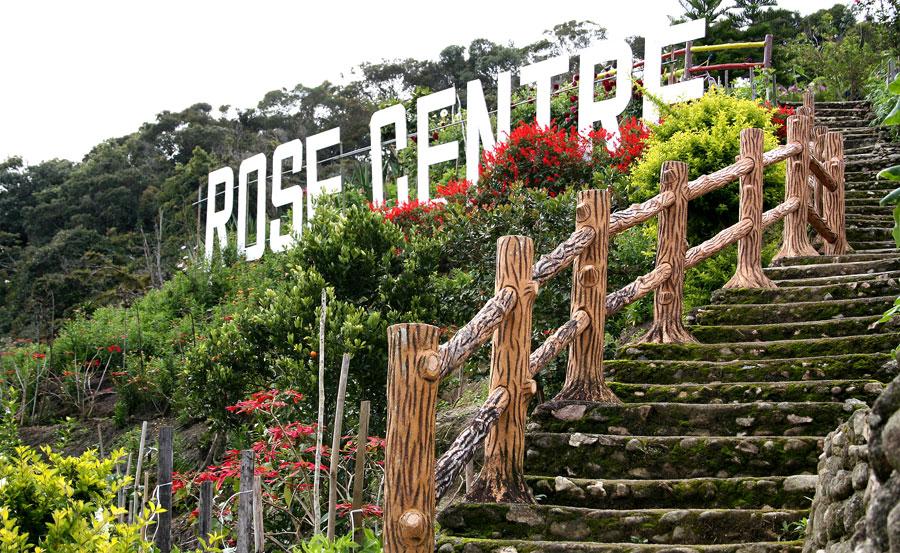 Hé Lộ Thiên Đường Xanh Cameron Highlands Malaysia - Tour Du
