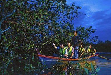 Tour Đặc Biệt Ngắm Đom Đóm Đêm Selangor – Tiêu chuẩn cao cấp 4 sao