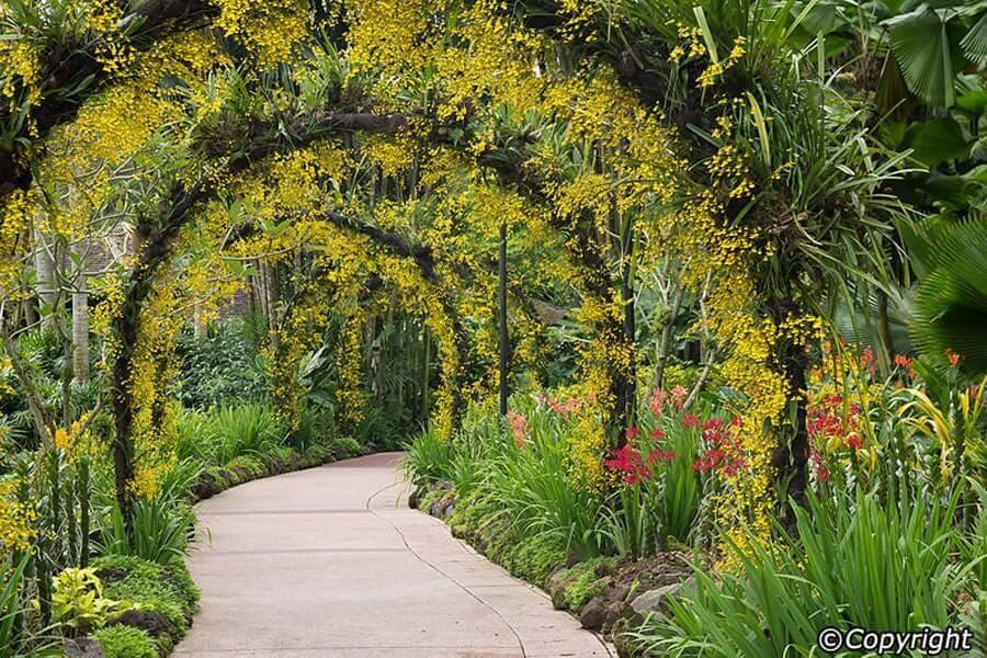 Khu vườn kỳ diệu