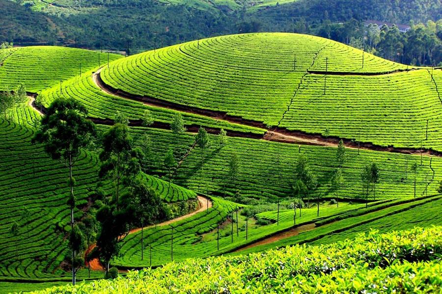 du-lich-cameron-malaysia