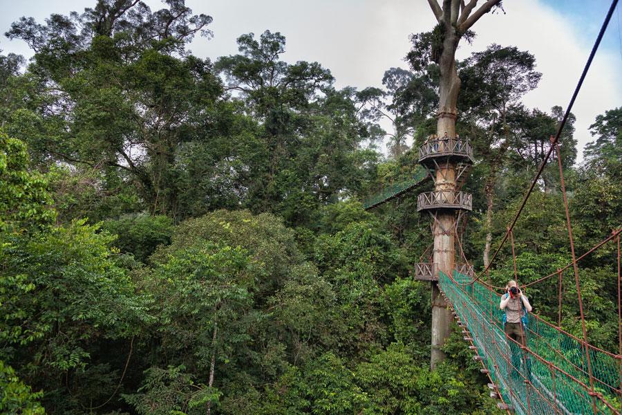 du-lich-thung-lung-Danum-malaysia-(2)