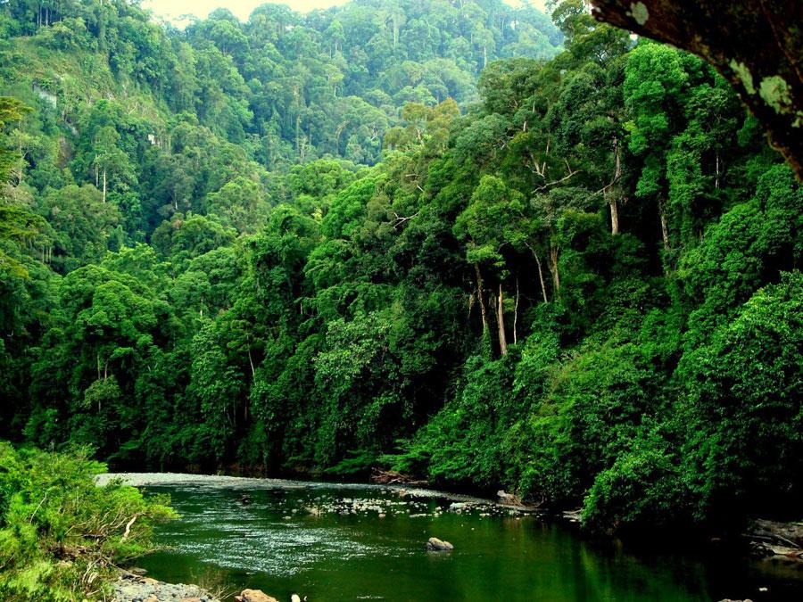 du-lich-thung-lung-Danum-malaysia